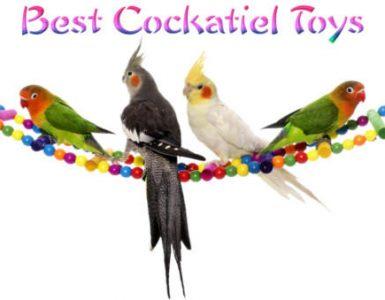best cockatiel toys reviews