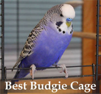 best budgie cage reviews