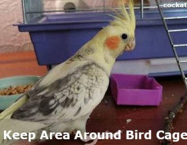 how to keep area around bird cage clean